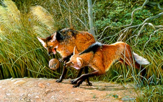Gososo-Maned Wolves & Armadillo by Carel Pieter Brest van Kempen