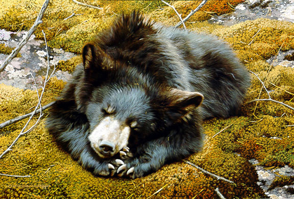 Bearly Asleep by Carl Brenders