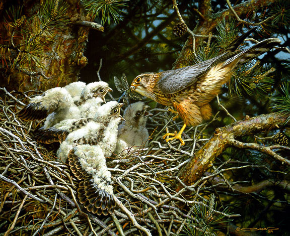 Merlins at the Nest by Carl Brenders