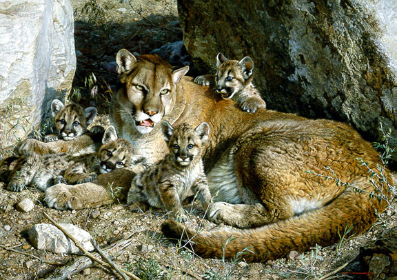 Rocky Camp – Cougar Family by Carl Brenders