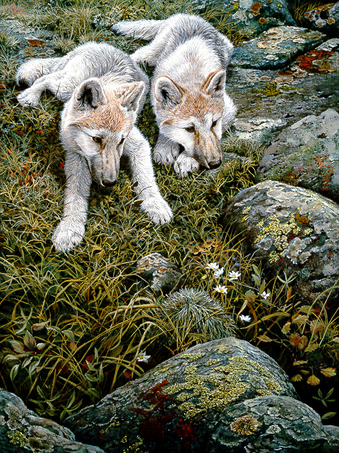 1Wildlife – Children of the Tundra – Arctic Wolf Pups by John Seerey-Lester