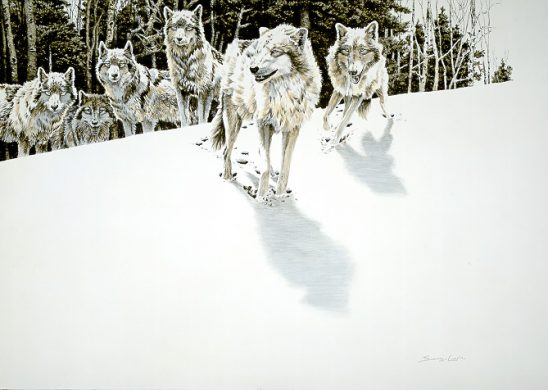 1Wildlife – Edge of the Forest – Timber Wolves by John Seerey-Lester
