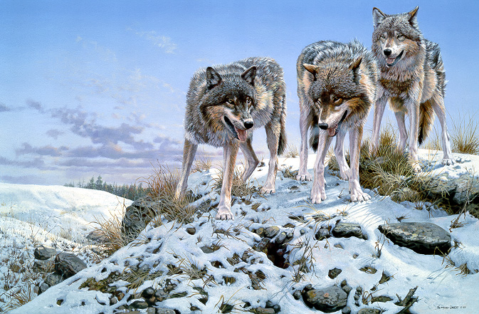1Wildlife – High Ground – Wolves by John Seerey-Lester