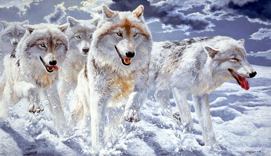 1Wildlife – Night Run – Arctic Wolves by John Seerey-Lester