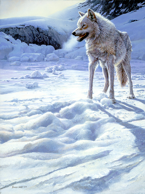 1Wildlife – Spirit of the North – White Wolf by John Seerey-Lester