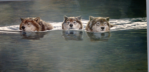 1Wildlife – Three Wolves in Water by John Seerey-Lester