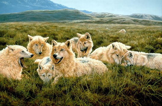 1Wildlife – Tundra Family – Arctic Wolves by John Seerey-Lester