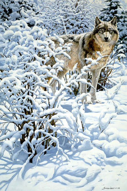 1Wildlife – Winter Spirit – Gray Wolf by John Seerey-Lester