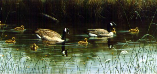A Fine Family – Canada Geese by Terry Isaac