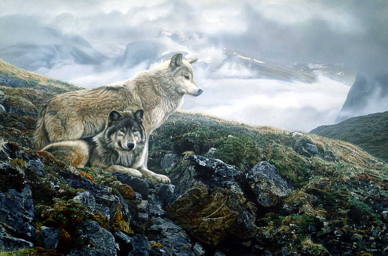 Above Timberline – Gray Wolves by Terry Isaac