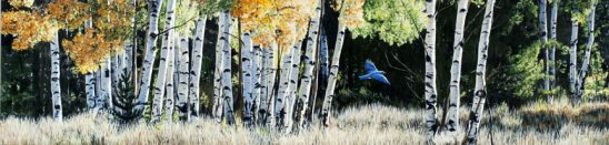 Among the Aspens – Bluebird by Terry Isaac