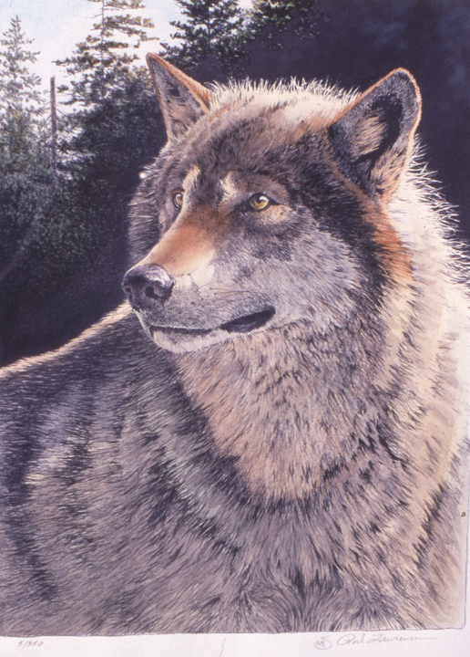 At the Edge – Timber Wolf – Hand Colored Mylar Print by Rod Lawrence