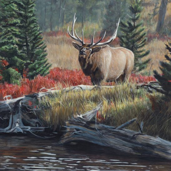 Autumn Bugle by Terry Isaac