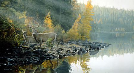 Autumn Gold – Whitetail Deer by Terry Isaac