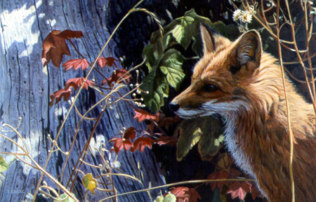 Autumn – Red Fox by Terry Isaac