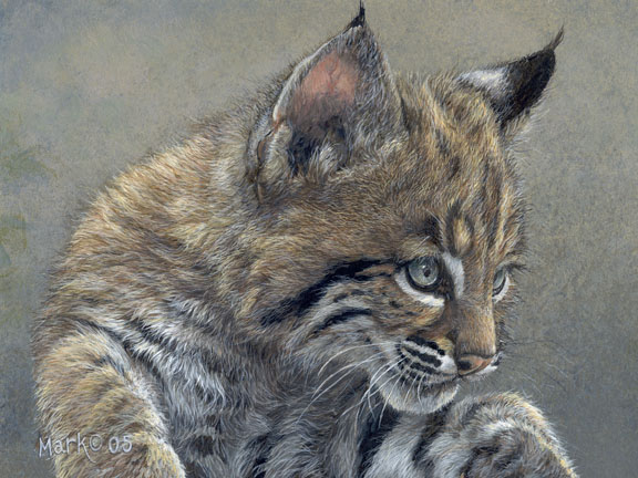 Baby Bobcat by Laura Mark-Finberg