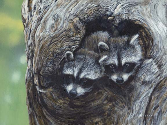 Bandit Buddies by Terry Isaac