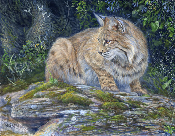 Bobcat and Bluebells by Laura Mark-Finberg