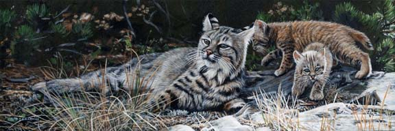 Bobcat and Kits by Terry Isaac