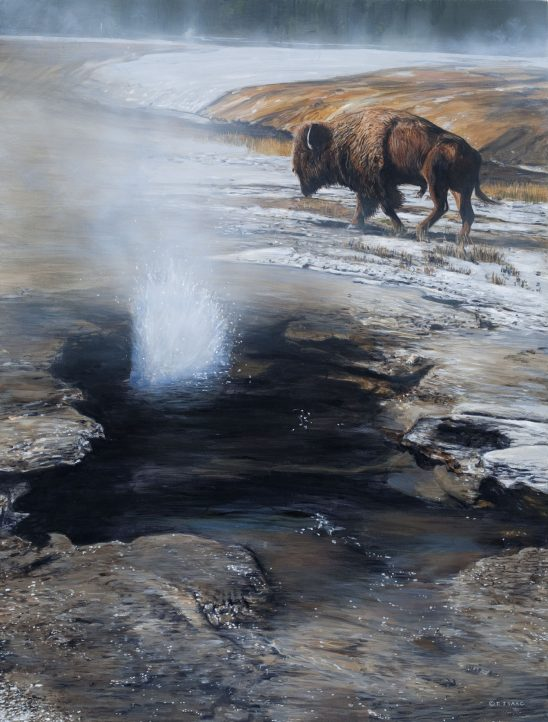 Buffalo Springs by Terry Isaac