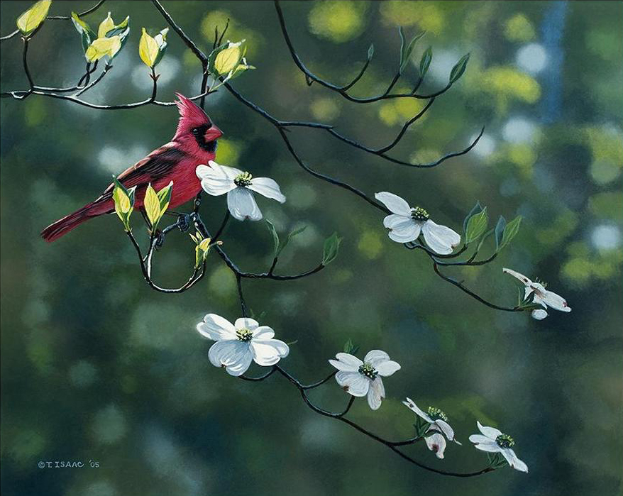 Cardinal and Dogwood by Terry Isaac