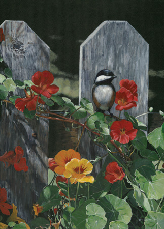 Chickadee and Nasturtium by Terry Isaac