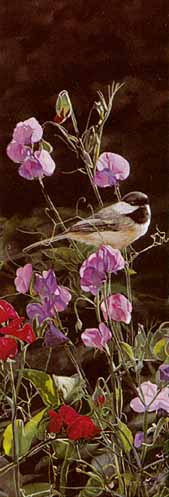 Dash of Color – Chickadee by Terry Isaac
