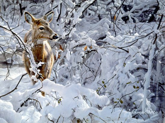 Deer in Snow by John Mullane