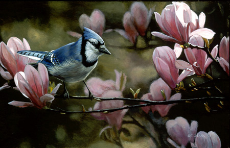 Eastern Bluejay by Terry Isaac