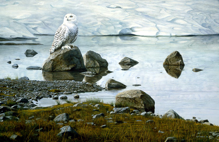 Edge of Spring – Snowy Owl by Terry Isaac