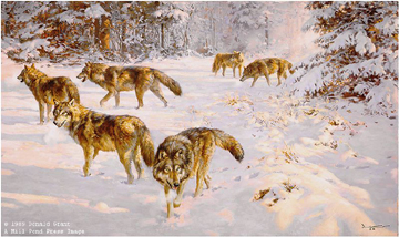 Evening Foray – Grey Wolves by Donald Grant