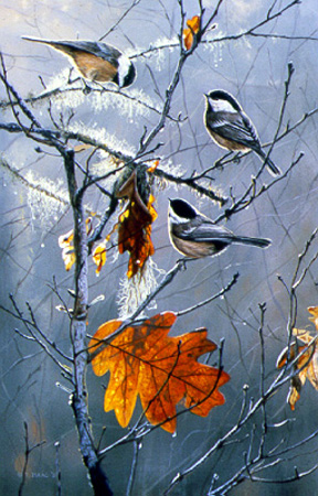 Fall Foragers – Black-capped Chickadees by Terry Isaac
