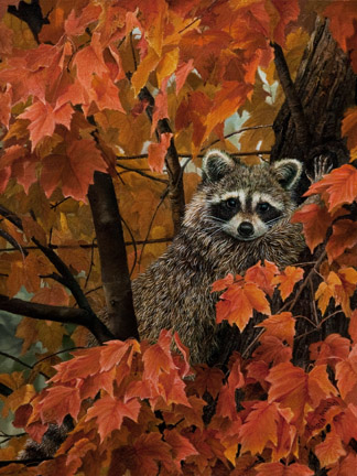 Fall Leaves – Raccoon by Karla Mann