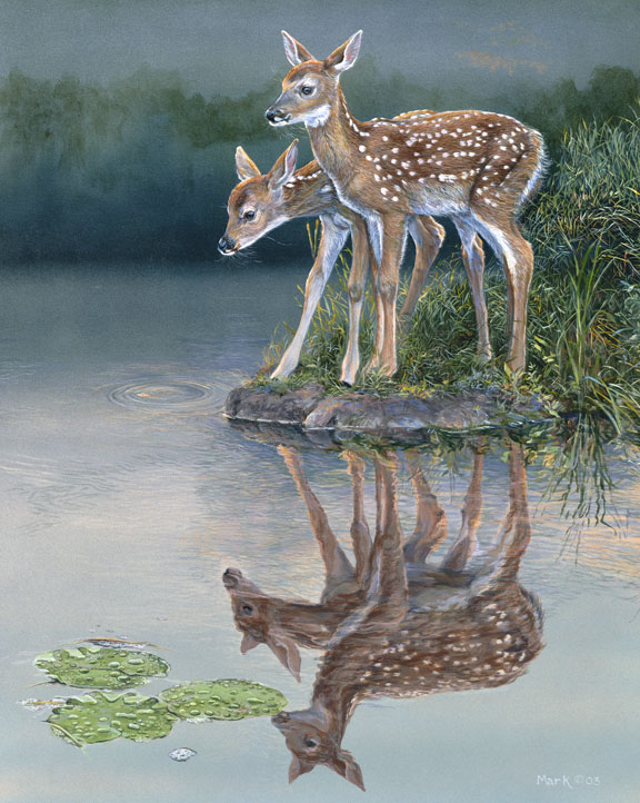 Fawns by Laura Mark-Finberg