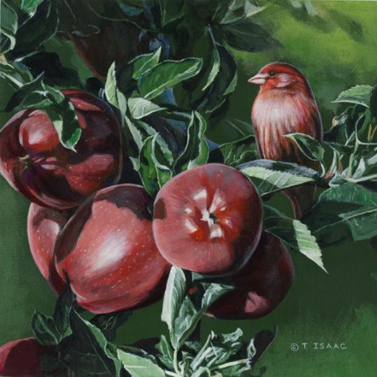 Red Finch in Apples by Terry Isaac
