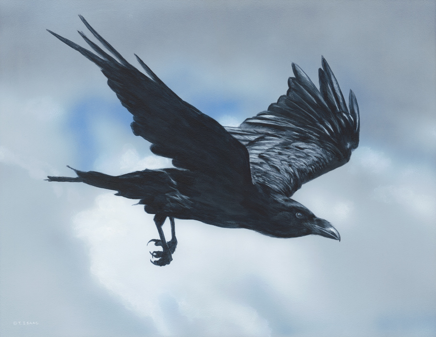 Flight of the Raven by Terry Isaac
