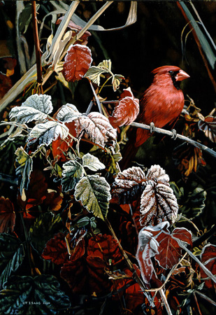Frost Fire – Cardinal Isaac by Terry Isaac
