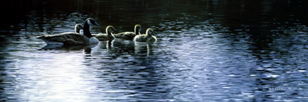 Geese by Terry Isaac
