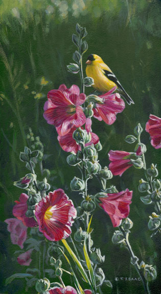 Goldfinch and Hollyhocks by Terry Isaac