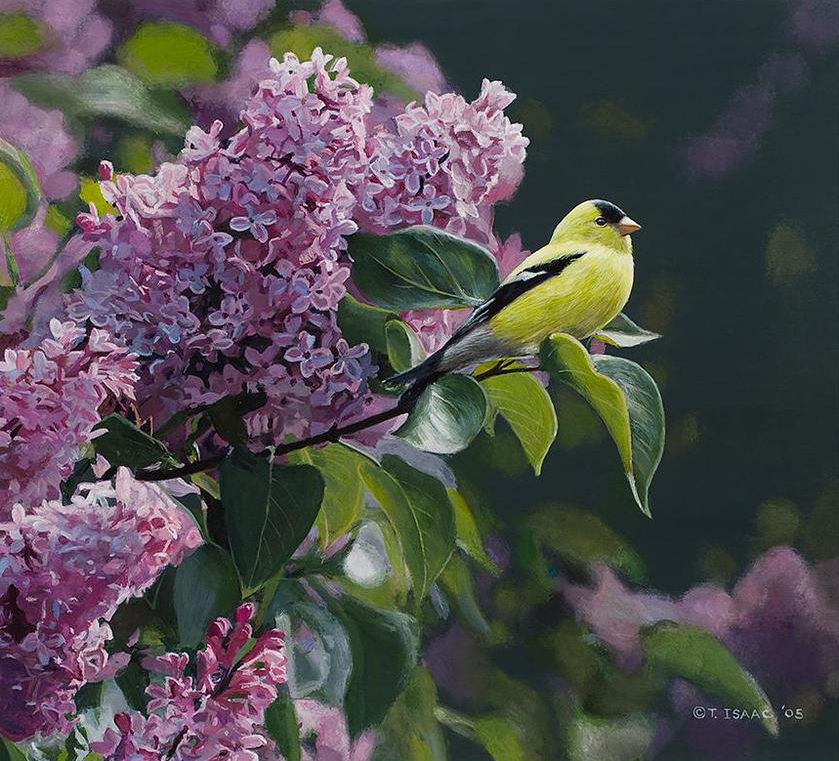 Goldfinch and Lilac by Terry Isaac