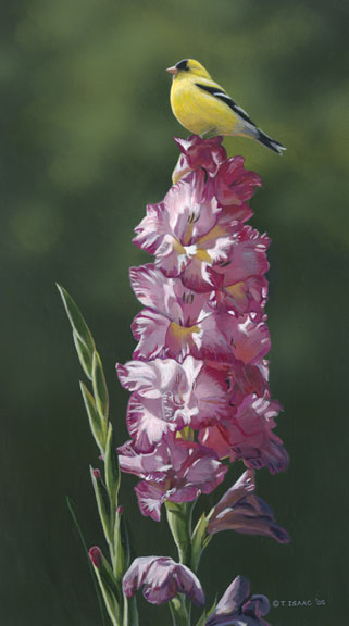 Goldfinch on Gladiolas by Terry Isaac