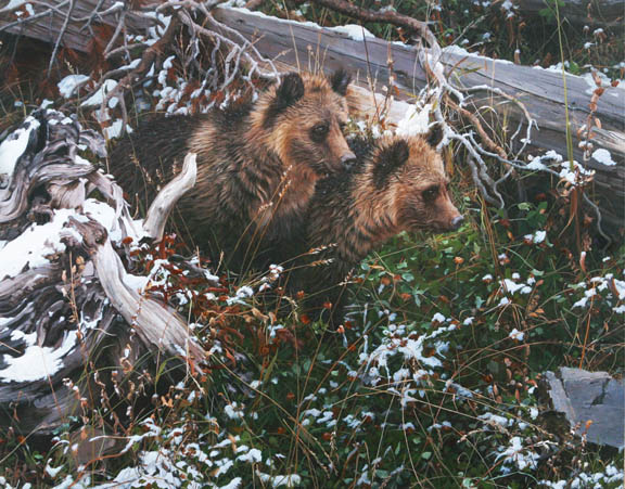 Grizzly Cubs by John Mullane