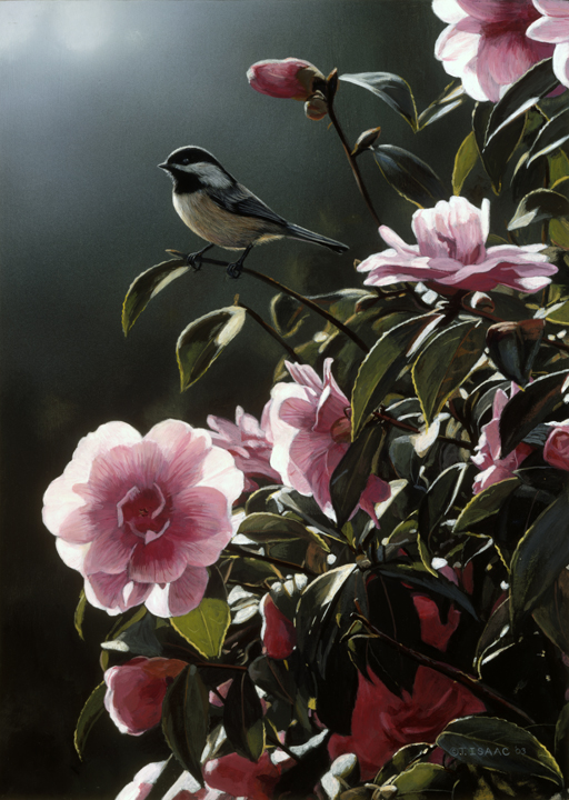 In the Limelight – Chickadee and Camelia  by Terry Isaac