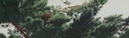 In the Pines by Terry Isaac
