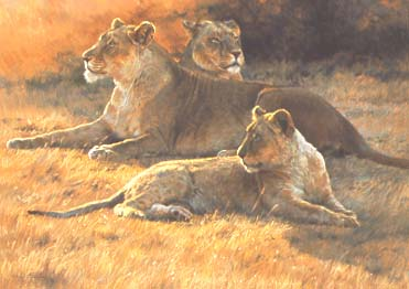 Lioness and Cubs at Sunset by Dino Paravano