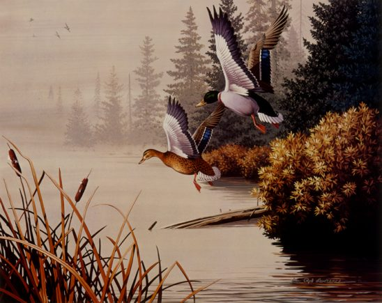 Mallards Flying 2 by Rod Lawrence