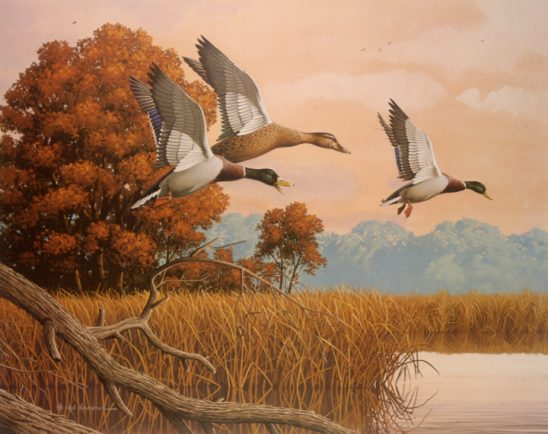 Mallards Flying by Rod Lawrence