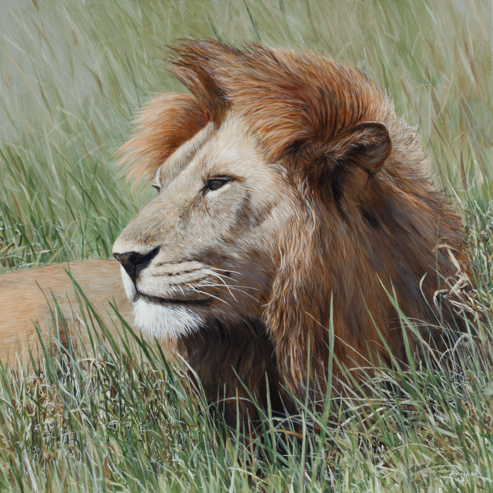 Mane Attraction by Terry Isaac