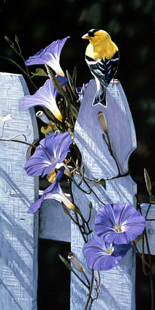 Morning Glories by Terry Isaac