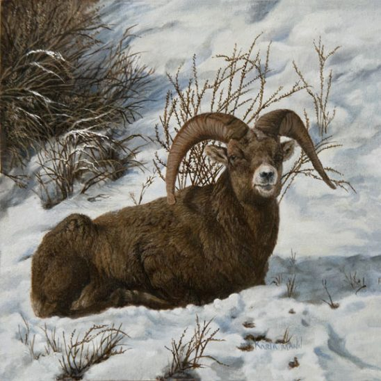 Mountain Sheep by Karla Mann